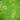 Зеленый с кольцами